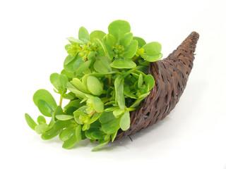 Gemüse-Portulak im Füllhorn