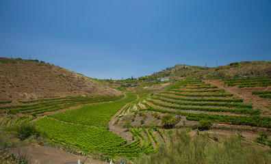 Vineyards around Bandama