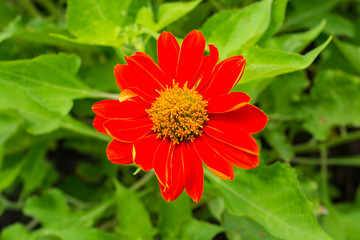 Large red flower