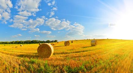 On a farm © denis_333