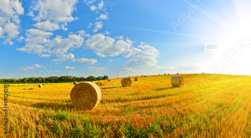 Foto op Canvas Weide, Moeras On a farm