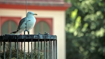 Seagull Resting On Cage