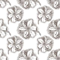 lily seamless