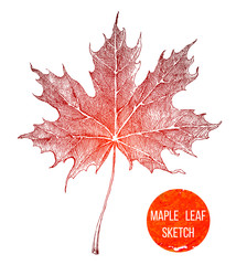 Hand drawn maple leaf