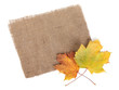 Scrap of burlap and autumn maple leaves