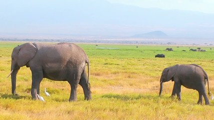 Elephant Calf And Mother