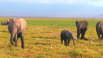 Baby elephant in a herd
