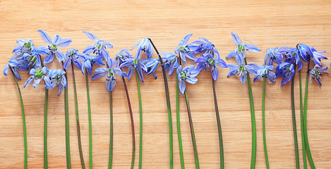 small blue spring flowers on a wooden background