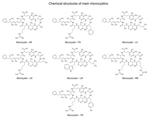 Chemical structural formulas of main microcystins