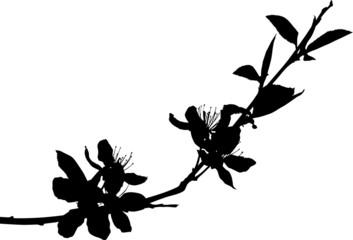 sakura simple branch silhouette black color