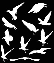 set of eleven gull white silhouettes