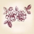 hand drawn roses