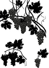 vine with leaves and grapes collection