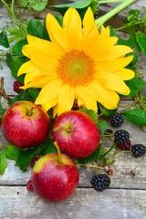 Herbstlich - Sonnenblume