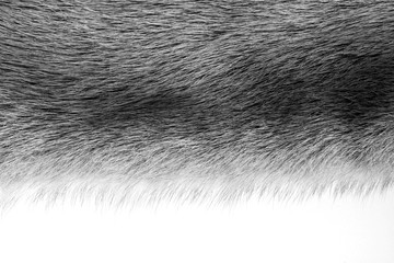 texture from fur of black color
