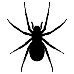 Schwarze Spinne von oben – Vektor und freigestellt