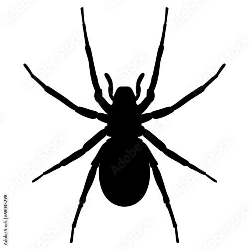 Schwarze Spinne von oben – Vektor und freigestellt - 69035298