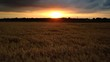 canvas print picture - Feld im Sonnenuntergang