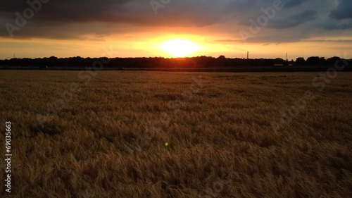 canvas print picture Feld im Sonnenuntergang