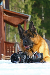 Dog and mountain-skiing boot