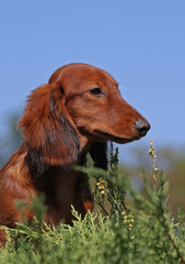 Puppy on a sky background