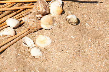 shells and straws in sand beach