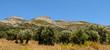Obrazy na płótnie, fototapety, zdjęcia, fotoobrazy drukowane : oliviers à Naxos