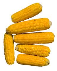 Corn ears 23