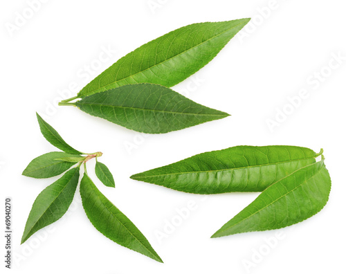 Peach leaf isolated on white background - 69040270