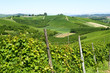 canvas print picture - Summer landscape in Langhe (Italy)