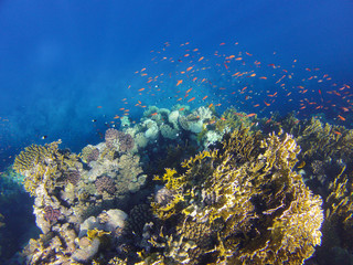 coralreef_4