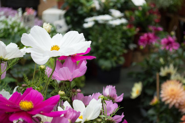 Flowers, Borough Market
