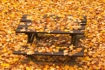 Bench in autumn park with foliage, Autumn landscape.
