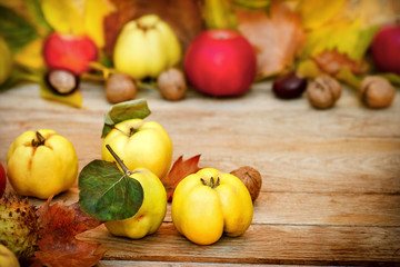 Autumn fruit - Autumn harvest