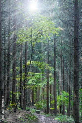 canvas print picture Waldlichtung