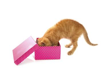 Present for kitten