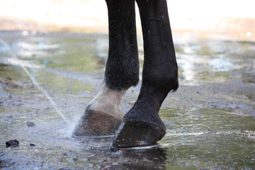 Close up of horse hoofs during washing