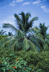 Caribbean Sea, Belize, birds on a palm tree in the rainforest