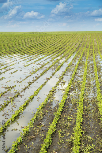 Agricultural disaster, field of flooded soybean crops. - 69048215