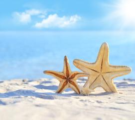 морские звезды на берегу моря
