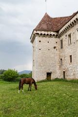 Cavallo e castello
