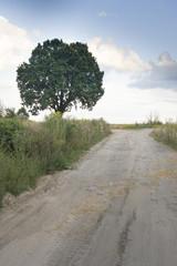 drzewo przy polnej drodze