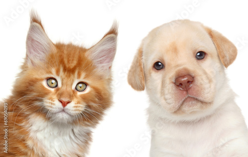 canvas print picture Kitten and puppy. Close-up portrait