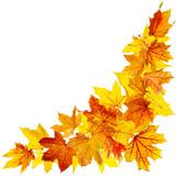 Fototapety Autumn maple leaves isolated on white background