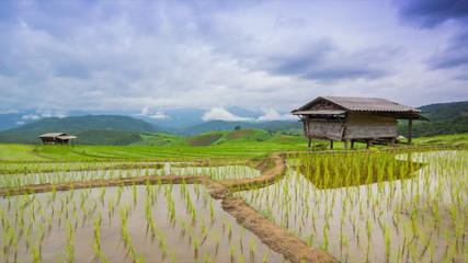 time lapse terrace rice farm and nimbus floating