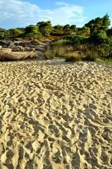 Footpath through sand dunes and vegetation