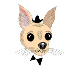 Portrait of a little dog hipster