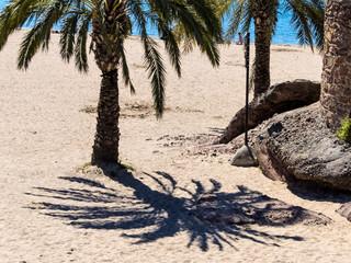 Palmenstrand, Schatten einer Palme an einem Sandstrand