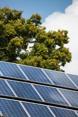 Solarpanele und Baum