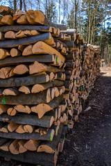 Umgeschnittene Baumstämme